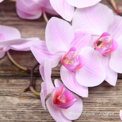 цветок в интернет-магазине